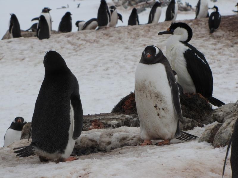 Antarctic Cruise Belongs On Any Skier S Bucket List