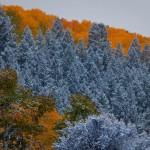 Aspensand evergreens (photo: Jeremy Swanson)