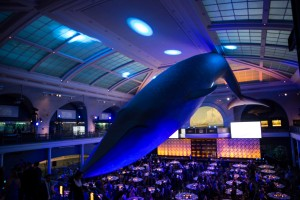 The scene for the 2014 New York Gold Medal Gala The Museum of Natural History, New York City (file photo: USSA)