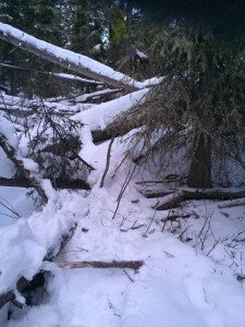 The location where Wright's body was found. (photo: Gallatin County Sheriff's Office)