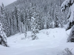 (photo: Bellingham Mountain Rescue Council)